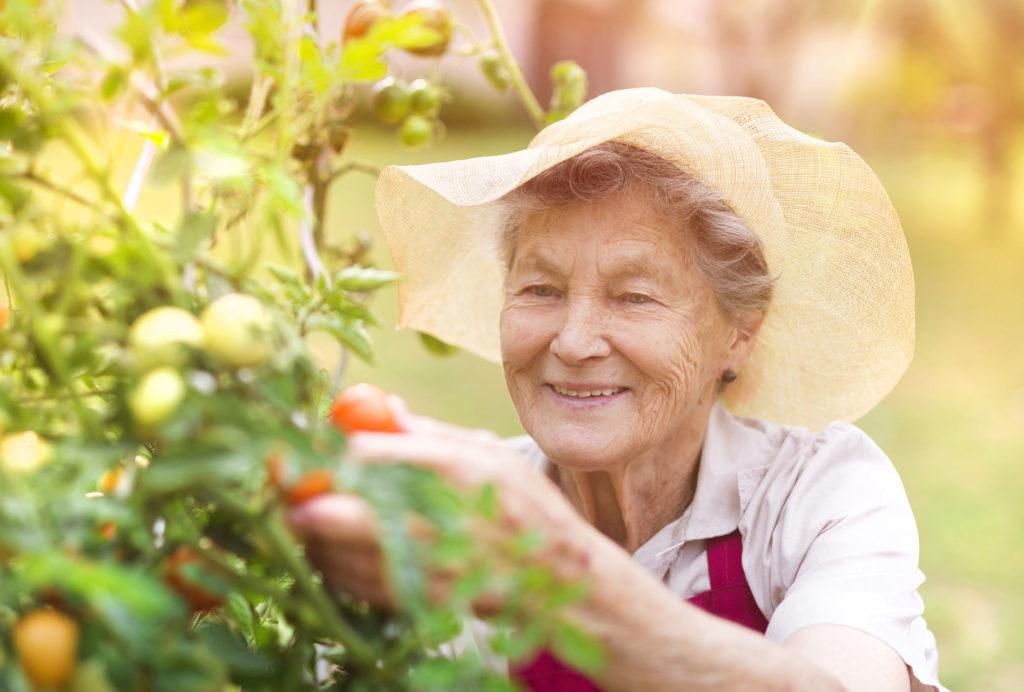 Affordable Life Insurance for Seniors
